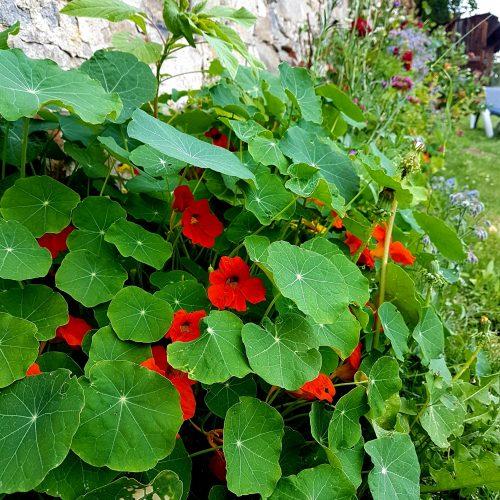 zahrada Nebespan 1