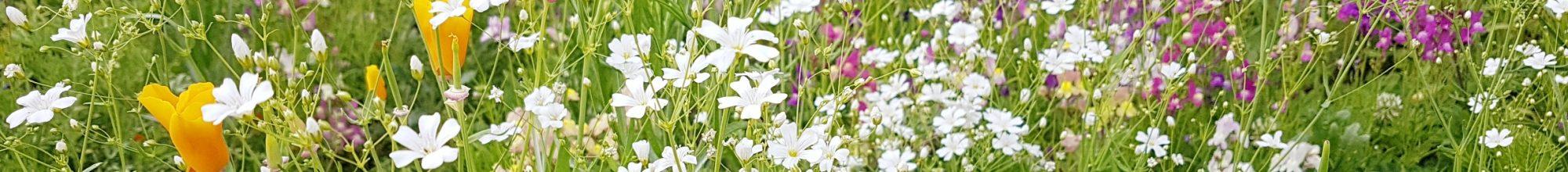 zahrada Nebespan 2