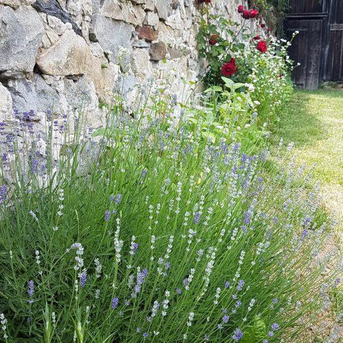 zahrada Nebespan 4